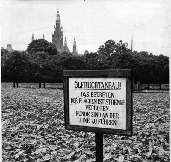Ölfrüchteanbau 1943